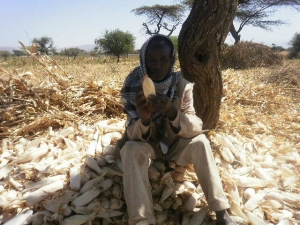 El Niño May Worsen Food Insecurity in Ethiopia