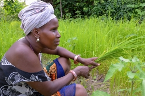 A woman farms a rice field in Kartiak, Senegal.